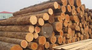 Wood log & Lumber